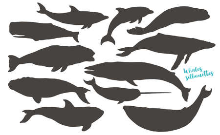 Whales silhouettes. Big collection of different whales and dolphins