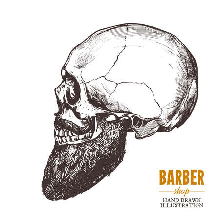 Hand drawn human skull with beard in the profile. Vector sketch engraving barbershop illustration
