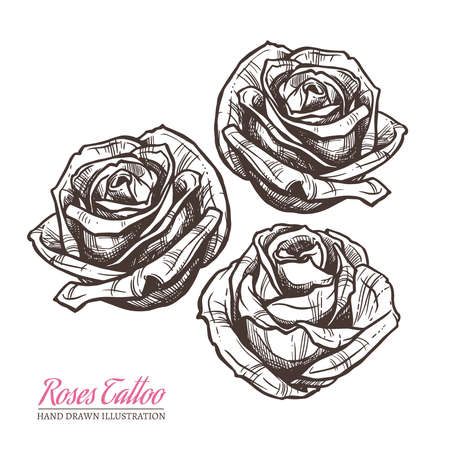 Sketch illustration of roses. Vector hand drawn tattoo design elements