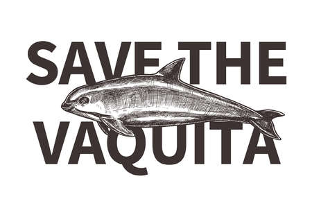 Typography design for International day save the vaquita. Poster with hand drawn sketch Gulf of California harbor porpoise. Protection of wildlife and endangered species Ilustração
