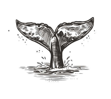 Hand drawn vector whale tail. Sketch illustration