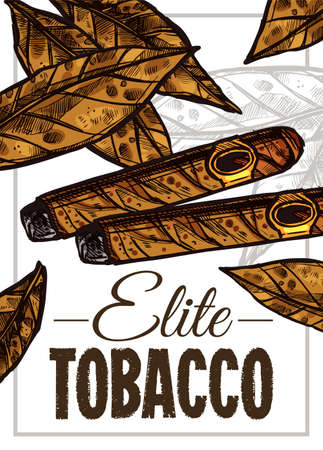 Vector color hand drawn poster with sketch cuban cigars and tobacco leaves. Template of design about smoking