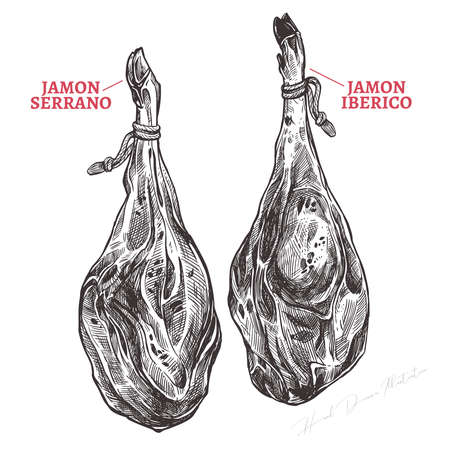 Spanish jamon iberico and serrano, hand drawn sketch illustration. Meat product or farm pork engraving vector
