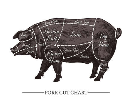 Vector pork cut chart. Retro hand drawn butcher diagram or guide. Vintage poster with sketch engraving black pig for meat shop Illustration