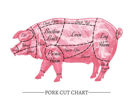 Vector pork cut chart. Retro hand drawn butcher diagram or guide. Vintage poster with sketch engraving pink pig for meat shop Illustration