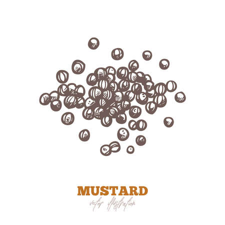 Dry mustard grain or seeds, isolated on white. Spices and herbs vector hand drawn sketch etching illustration Ilustracje wektorowe