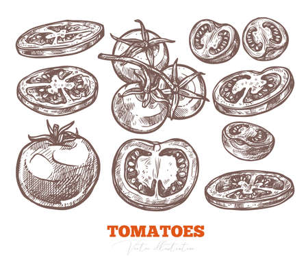 Tomatoes hand drawn vector set, half and sliced piece. Organic healthy food and fresh vegetables. Sketch etching illustration Ilustrace