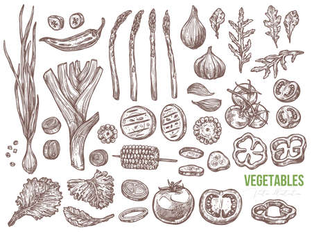 Vegetables and organic healthy food vector set. Slices and half tomatoes, paprika, pepper, cucumber, asparagus, salad, corn. Leaves of arugula, leek and bow. Sketch hand darwn illustration