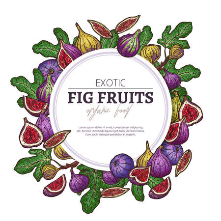 Fig fruits circle banner. Exotic vector background. Hand drawn colorful sketch illustration