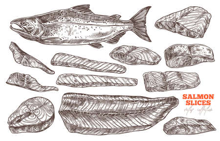 Salmon red fish sketch vector set. Steak and slices meat for cooking grill and bbq. Hand drawn illustration Ilustração Vetorial