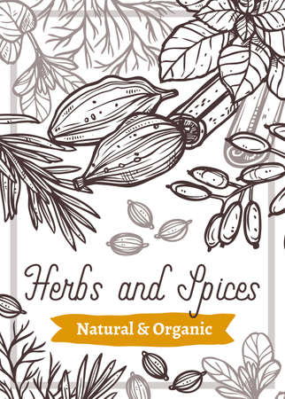 Aroma spices and herbs hand drawn web banner template. Cardamom seeds and cinnamon sticks line art. Tarragon leaves, rosemary twigs outline illustration. Organic products store brochure Ilustracja
