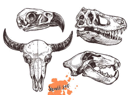 Vector collection of hand drawn animals skulls. Sketch skulls of eagle, dinosaur t-rex, lion and buffalo