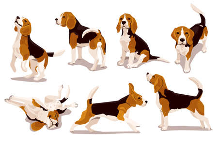 Cute cool beagle puppy set. Collection of flat dog in various poses and actions. Vector illustration of domestic pet behavior 矢量图像