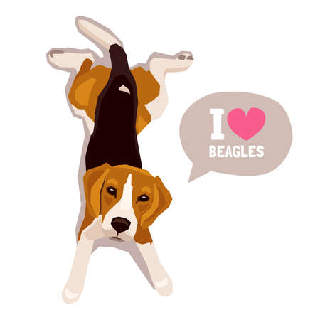 Cute cool lying beagle puppy and looking up. Flat dog vector illustration. Domestic pet behavior
