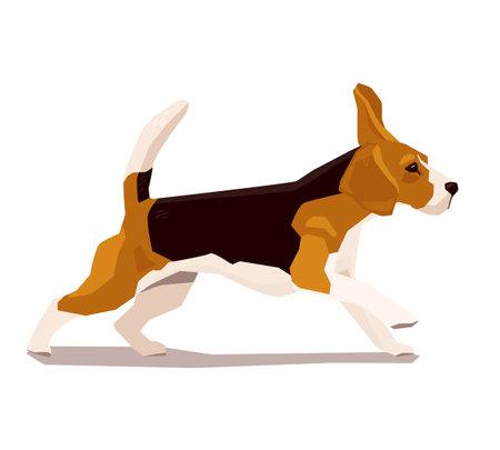 Cute cool running beagle puppy. Flat dog vector illustration. Domestic pet behavior