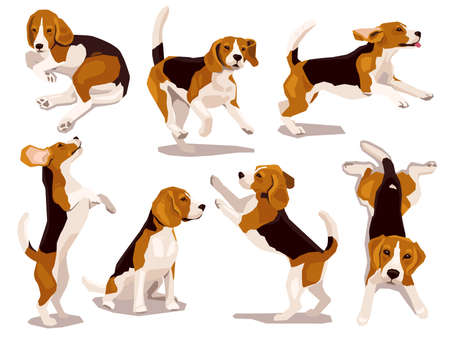 Cute cool beagle puppy set. Collection of flat plaing dog in various poses and actions. Vector illustration of domestic pet behavior 일러스트