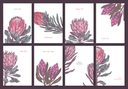 Minimalistic trendy color cards hand drawn style with king and queen protea with empty place for message. Sketch design for poster or print with vector botanical illustration for wedding or valentine Ilustração