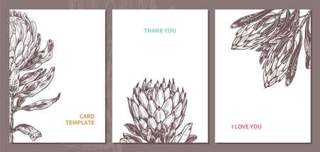 Minimalistic trendy cards in monochrome hand drawn style with king and queen protea with empty place for message. Sketch design for poster or print with vector botanical illustration for wedding