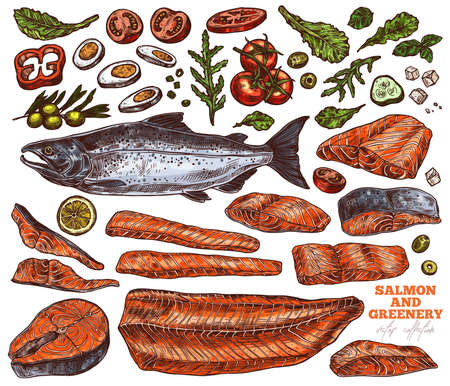 Salmon and greenery hand drawn illustrations set. Raw uncooked red fish fillet pieces and steaks color sketches pack. Boiled egg, tomatoes and lemon slices. Green salad, basil leaves drawings 矢量图像
