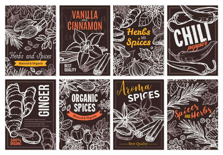 Sketch vector design templates with herbs and spices, hand drawn illustration of ginger, rosemary, mint, vanilla, cinnamon, chili pepper. Set of cards and posters with botanical and floral ingredients