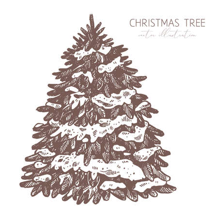 Vector fluffy spruce under the snow. Engraved etching illustration of christmas tree. Hand drawn sketch