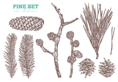 Coniferous vector hand drawn set. Pine tree, fir, spruce and larch branches and cones.  Sketch forest floral plant illustration. Engraved etching christmas evergreen botanical symbols
