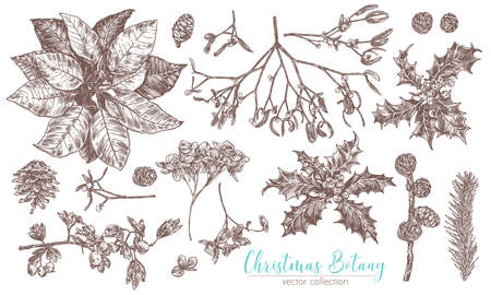 Christmas vintage collection of flowers and evegreen plants. Vector sketch engraved botanical set. Floral hand drawn etching fir-tree, poinsettia, holly berries, cones, spruce, mistletoe Stock Illustratie