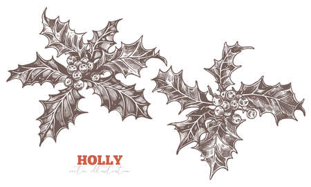 Festive floral decoration. Holly berry european symbol of Eve and Merry Christmas. Vector sketch illustration. Botanical hand drawn engraved etching