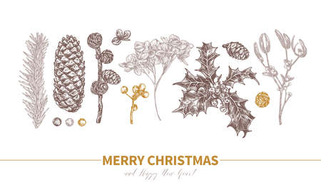 Vector design of Merry Christmas and Happy New Year with sketch engraved evergreen plants and flower. Etching botanical illustration. Cones, branches of fir, spruce, holly berries, mistletoe