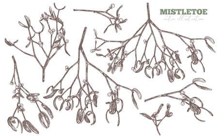 Vector set of sketch hand drawn mistletoe. Sketch floral illustration of christmas symbols and decoration. Engraved botanical etching