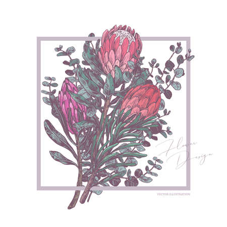 Background with sketch drawing bouquet of protea and eucalyptus. Botanical vector illustration with trendy pink and green colors for card, wedding invitation. Tropical exotic flower Ilustração
