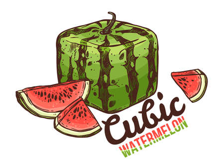 Vector linear doodle cubic or square watermelon and cut slices. Colorful hand drawn sketch illustration of sweet fruit