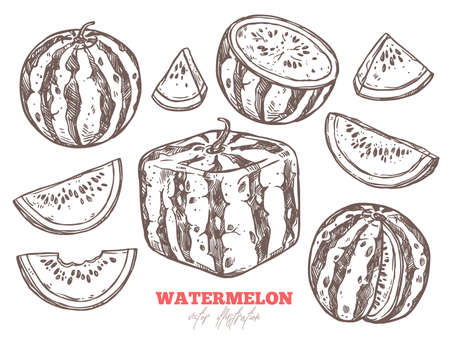 Watermelon vector sketch doodle set. Half, cutting, slices and cubic fruit. Hand drawn illustration 矢量图像