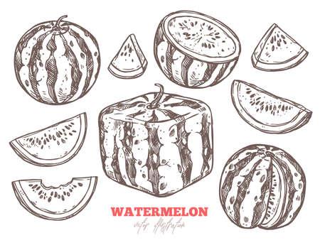 Watermelon vector sketch doodle set. Half, cutting, slices and cubic fruit. Hand drawn illustration Ilustração