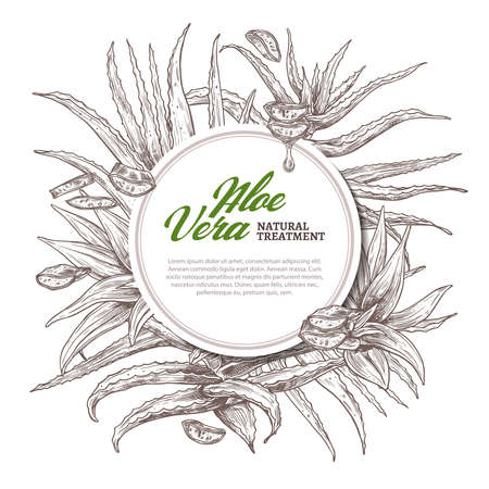 Aloe vera circle frame. Hand drawn vector background with slices and leaves of home herbal medicine flowers and plants. Sketch design template of label with barbadensis, cactus with oil drop for care