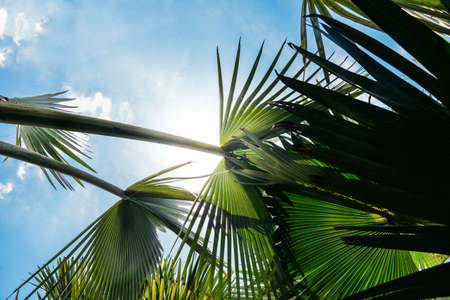 Captured in Brazil, a designer's background consisting of sun-lit lush tropical palm trees against a beautiful blue sky
