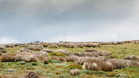 Northern Andean paramo is an ecoregion containing paramo vegetation above the treeline in the Andes of Colombia and Ecuador Stock Photo - 95072961