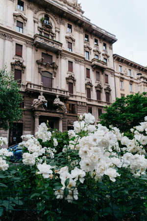 White flowers on the foreground of Art Nouveau architecture in Milans Porta Venezia district, Lombardy, Italy Archivio Fotografico - 111153677
