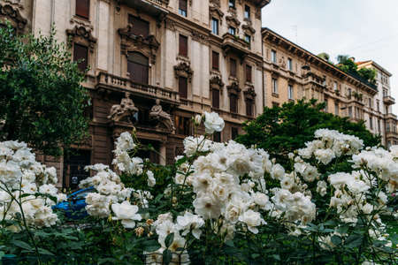 White flowers on the foreground of Art Nouveau architecture in Milans Porta Venezia district, Lombardy, Italy Archivio Fotografico - 111153681