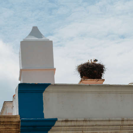 White stork, Ciconiidae, family giant nest with little baby on top of a roof in Algarve, Portugal