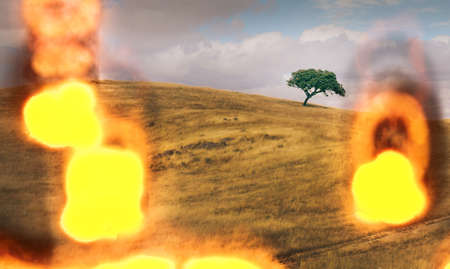 Fire on rolling hilly plowed field with solitary suber cork oak tree, Quercus Suber