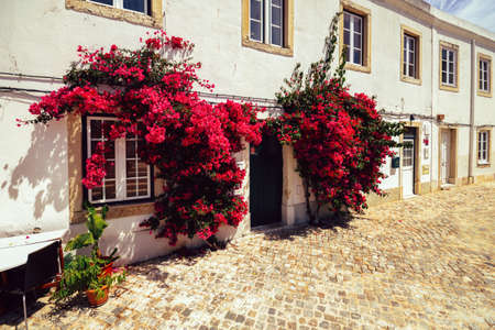 Bougainville flowers on whitewashed facade of typically Portuguese house