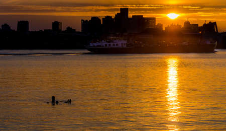 Silhouette of man swimming on Maas river in Rotterdam, Netherlands with skyline in background 스톡 콘텐츠