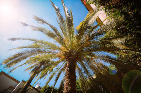 Looking up wide angle of single palm tree against a bright blue sky with sun flares
