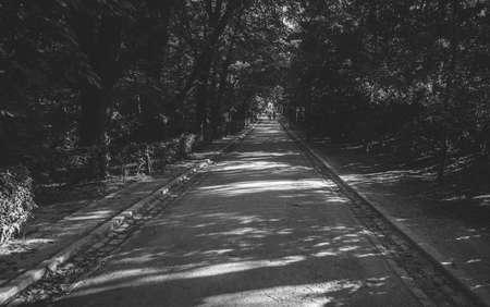 weg straat door het herfstbos. kleurrijke bladeren en bomen in het herfstseizoen van europa. herfst kunst fotografie. zacht licht indiase zomertint. levendige kleur. reizen reis pictogram thema concept.
