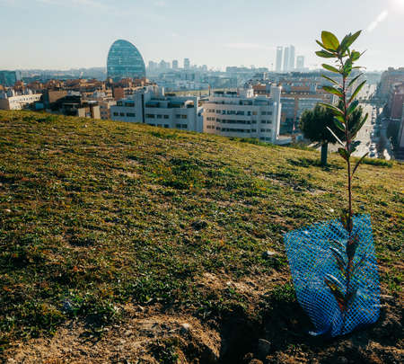 Small tree planted on a hill overlooking Madrid, Spain on a sunny day
