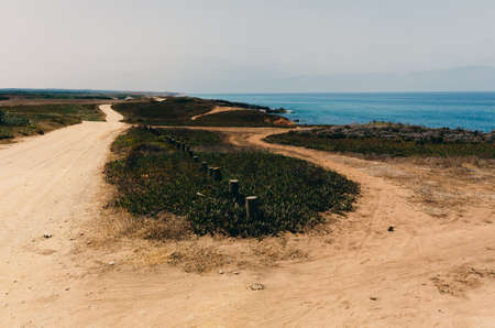Sandy hiking path. Nature scenery with small bushes and flowers. Ocean in the distance. Rota Vicentina, Alentejo, Portugal.