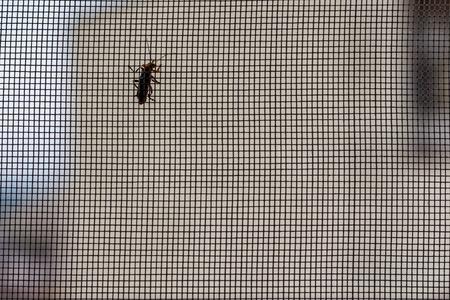 蚊帳や昆虫 写真素材