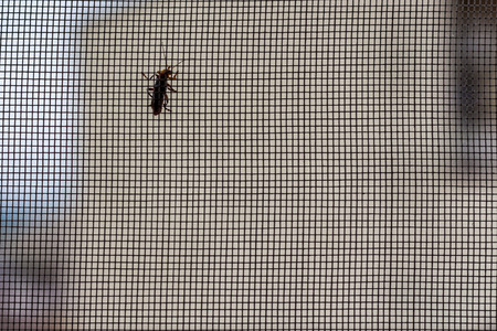 ploy: Mosquito net and an insect
