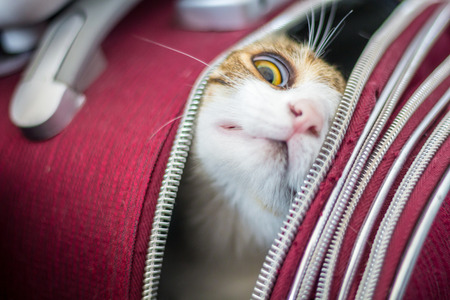 Cat in a trolley bag Stock Photo